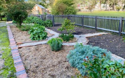 Mary's Garden – a heritage garden project